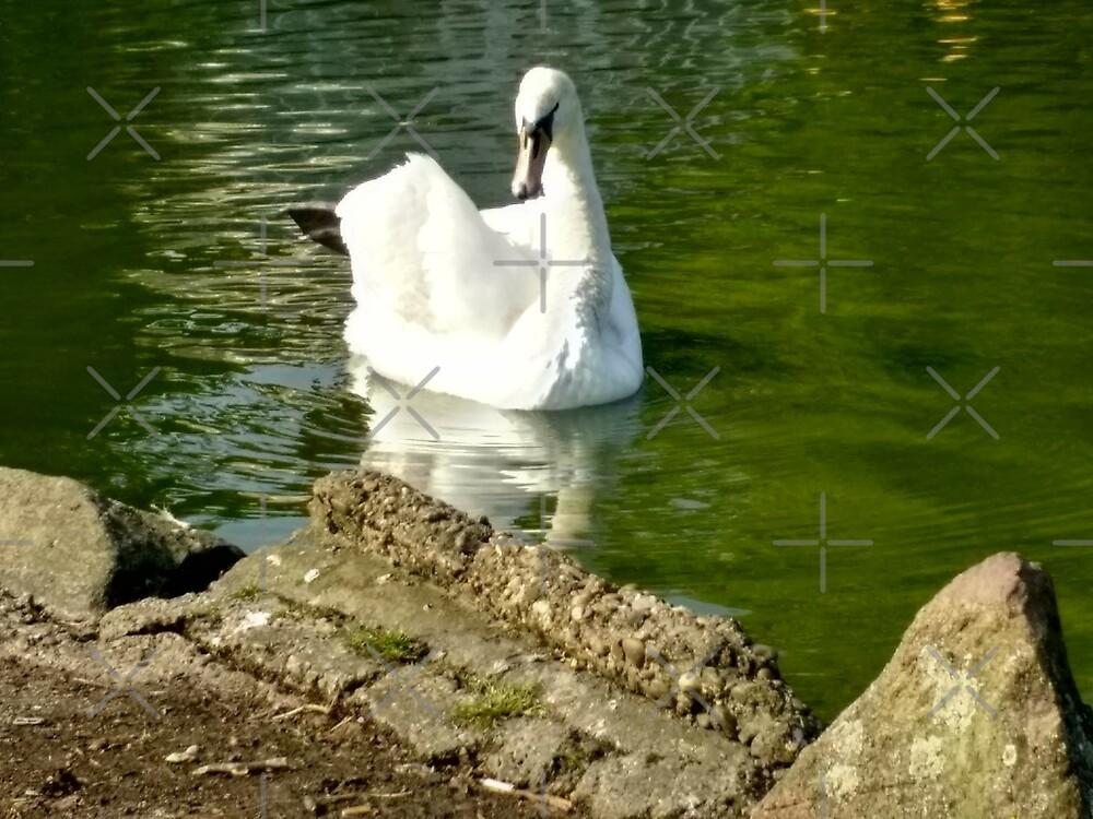 Merch #48 -- Swan - Shot 6 by Naean Howlett-Foster