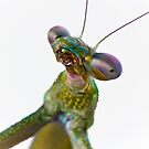 Mantis by SD Smart