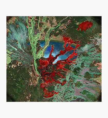 """Wood Lake""  Photographic Print"