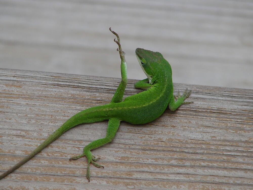 """""""Yoga Lizard"""" by KeljoBauer"""