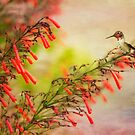 Hummingbird Perched on Red Wildflowers by Susan Gary