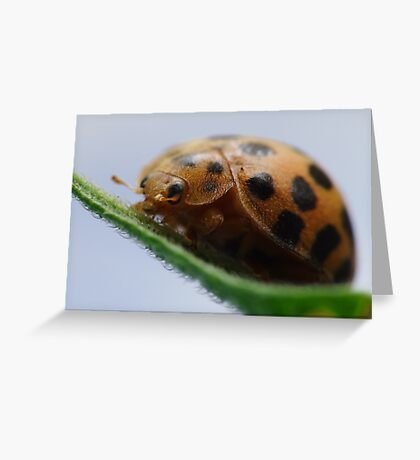Lady Bug Greeting Card