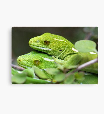 Wellington Green Gecko Canvas Print