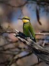 Swallow Tailed Bee Eater, Okavango, Botswana by Neville Jones