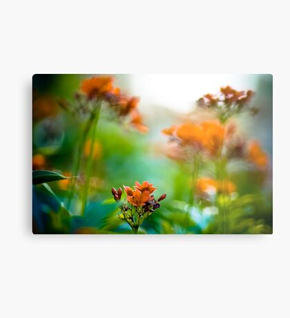 Orange meet green: On Featured : Point and Shooters group Metal Print