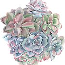 succulents by youdesignme