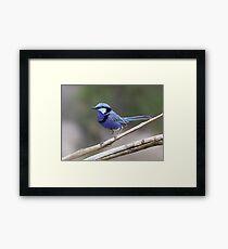 Little Blue Dreamer Framed Print