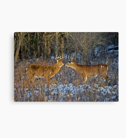 Why can't we be friends... Canvas Print