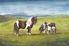 Ponies At Burra, Shetland by Redbarron
