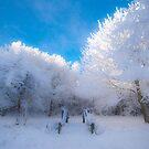 Snow Bridge by marc melander