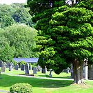Beauty In The Graveyard by Chris Goodwin