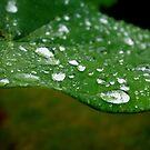 Rain Rain go away by BlackHairMoe