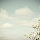 Clouds & Dogwood by O. Joy