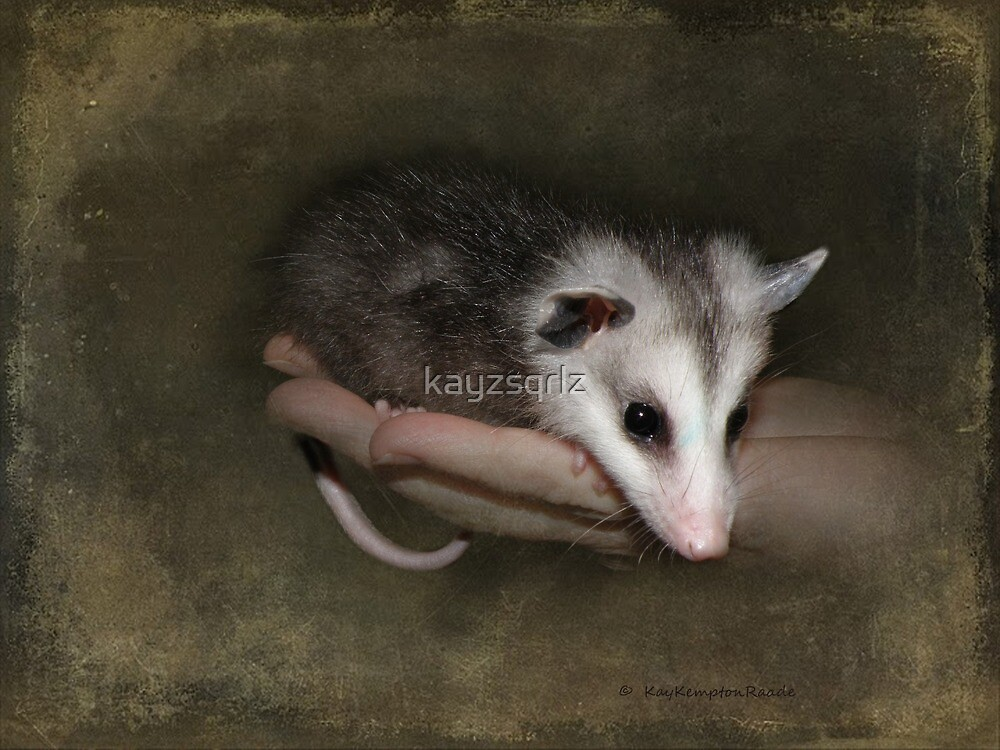 An Opossum Child by kayzsqrlz