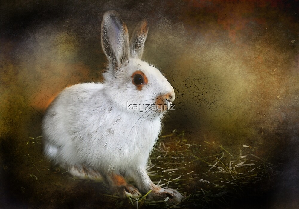 Woolie the Snowshoe Hare by kayzsqrlz