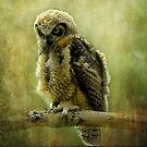 Young Great-Horned Owl by kayzsqrlz
