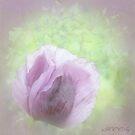 Romantic purple by aMOONy