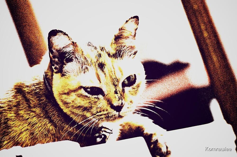 Meow... by Kornrawiee