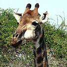 Portrait of a Giraffe by Margaret  Hyde
