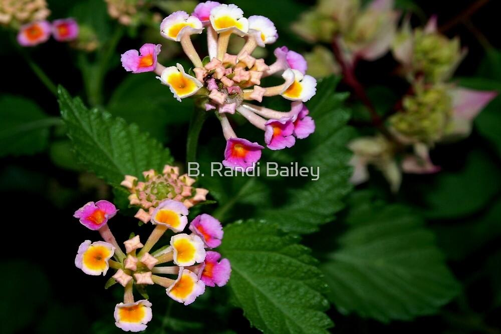 Flower intricacy by ♥⊱ B. Randi Bailey