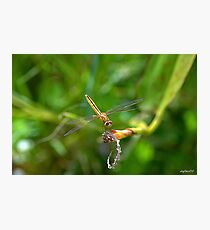 Golden Dragon Photographic Print