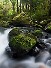Nikau Stream by Michael Treloar