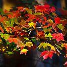 Colors of Autumn by Joe Elliott