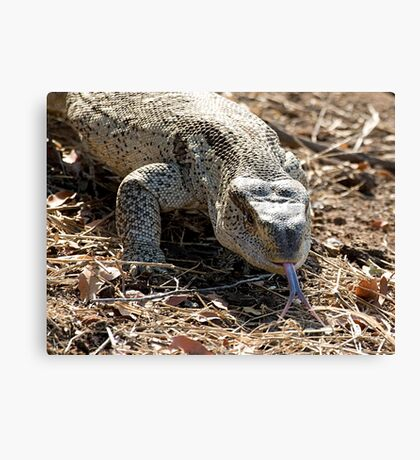 African Rock Monitor Canvas Print
