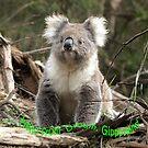 Koala in the Forest #2 - Australia by Bev Pascoe