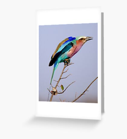 Lilac Breasted Roller - Pre Flight Check Greeting Card