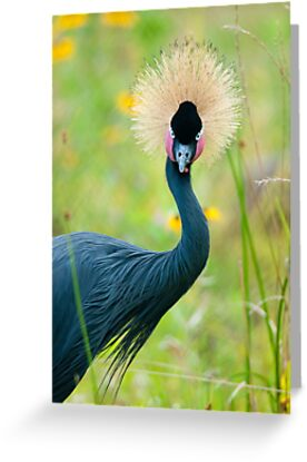 """Fancy Feathers"" - an african crowned crane by ArtThatSmiles"