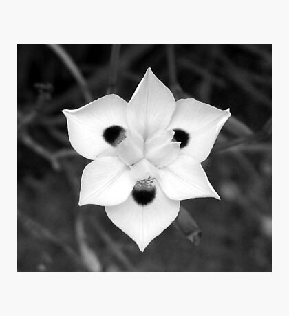 Iris in Black and White Photographic Print