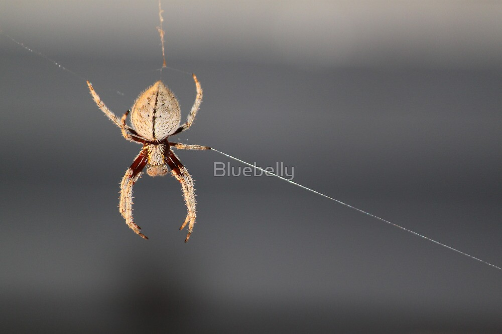 Web spinner by Bluebelly
