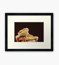 Central Bearded Dragon (Pogona vitticeps) Framed Print