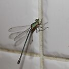 To catch a dragonfly by Cathie Trimble