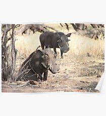 Warthogs Poster