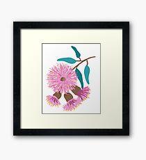 Australian Pink Gum Blossom Framed Print