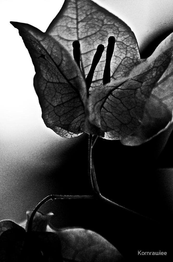 Mind... by Kornrawiee