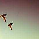 Flight by Lindsey W