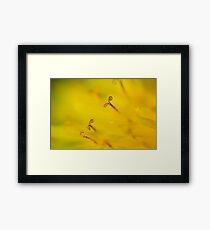 Macro Flower - Blütenstaub Framed Print