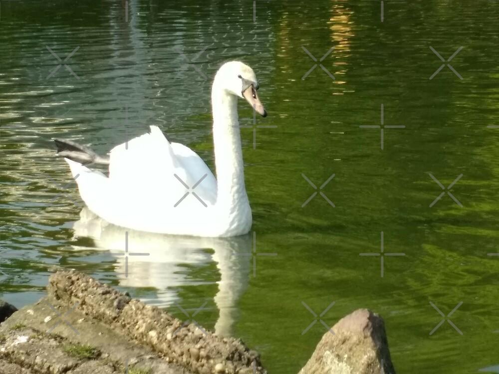 Merch #49 -- Swan - Shot 7 by Naean Howlett-Foster