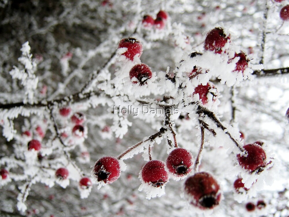 Nature's Baubles by Holly Daniels