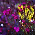Colorful Inconvenience by Igor Mazulev