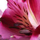 Purple flower II by Igor Mazulev
