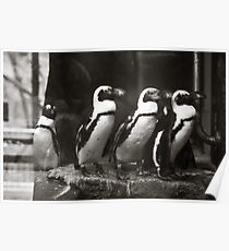 The Penguins of Como Zoo Poster