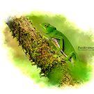 Furcifer timoni female on green by Dr Mark D. Scherz
