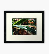 Water Droplets On A Blade Of Grass Framed Print