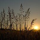 Silent sunrise by Igor Mazulev