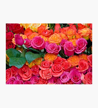 Colorful Roses Photographic Print