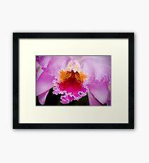 PInk Cattleya Orchid Framed Print